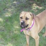 Chloe Marie: The amazing gluten free dog